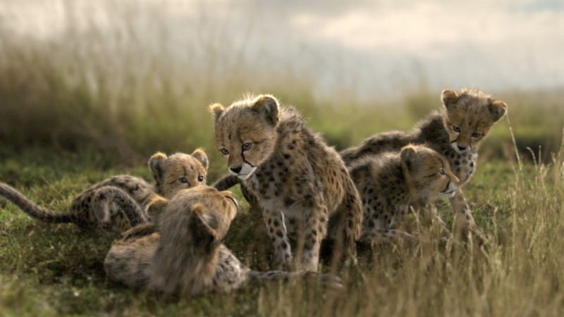 Mazda CX5 - Cheetah Cubs